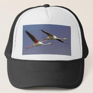 Två mer underbara Flamingos Phoenicopterus Roseus Truckerkeps