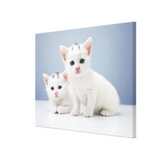 Två mycket unga vitkattungar stirrar inquisitively canvastryck
