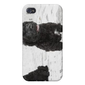 Två portugisiska vattenhundvalpar i ett rum iPhone 4 fodral