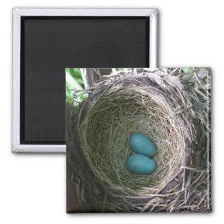 Två Robins ägg bygga bo in Magnet