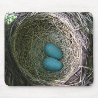 Två Robins ägg bygga bo in Mus Mattor
