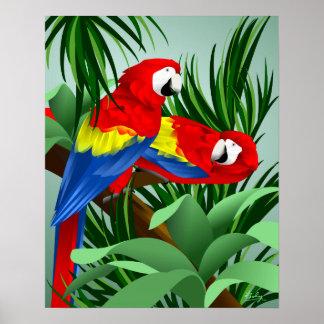 Två scharlakansröda Macaws Poster