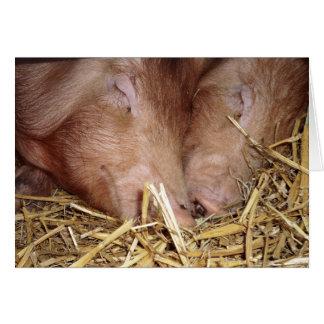Två söta sova grisar fotograferar - tomma kort