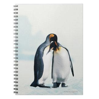 Två tillgivna pingvin anteckningsbok med spiral