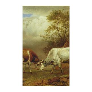 Två tjurar med låste Horns, 1653 Canvastryck