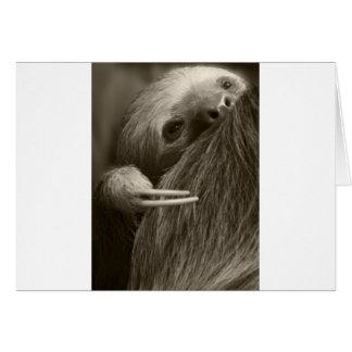 två toed sloth hälsningskort