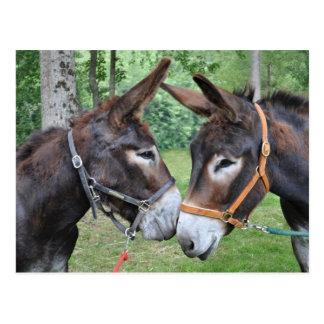 Två vänliga åsnor vykort