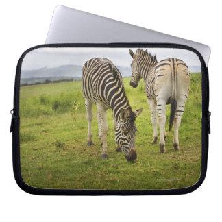 Två zebror, Sydafrika Datorskydd