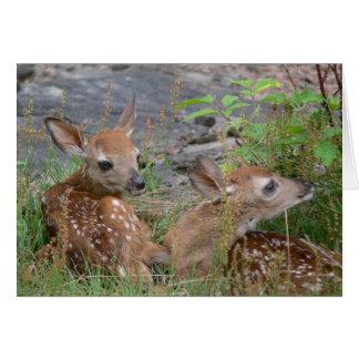 Tvilling- Bambi kort