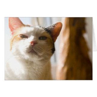 Tvivla katten hälsningskort