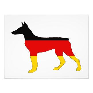 Tysk flagga - Dobermann Pinscher Fototryck