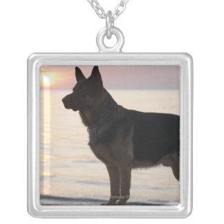 Tysk herdehund på den georgiska fjärden, Ontario, Silverpläterat Halsband