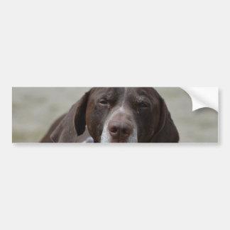 Tysk Shorthaired pekarehund Bildekal