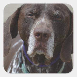 Tysk Shorthaired pekarehund Fyrkantigt Klistermärke