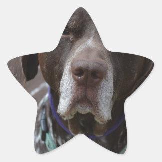 Tysk Shorthaired pekarehund Stjärnformat Klistermärke