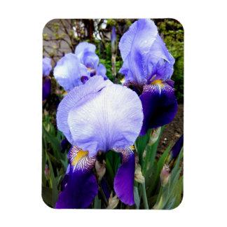 Tyska Irises och några Raindrops Magnet