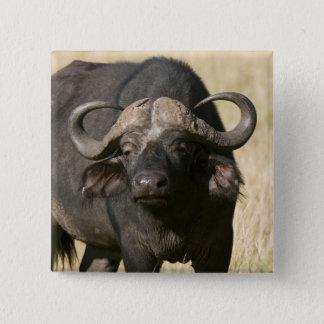 Uddbuffel (Syncerus caffer), Masai Mara Standard Kanpp Fyrkantig 5.1 Cm