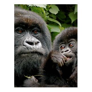 Ugandiska gorillor vykort