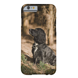UK England, Suffolk, Thetford skog, Spaniel Barely There iPhone 6 Fodral