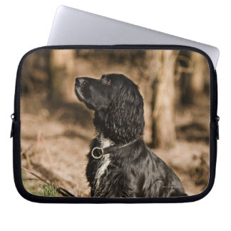 UK England, Suffolk, Thetford skog, Spaniel Laptop Fodral