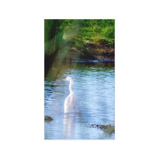 Underbar egret i våtmarker canvastryck