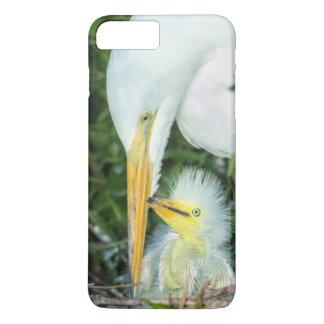 Underbar Egret och bebisegret på Gatorland