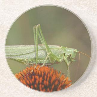Underbar grön Bush-Syrsa (den Tettigonia Underlägg