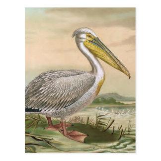 Underbar illustration för fågel för vykort