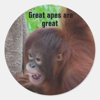 Underbara apor är underbara runt klistermärke