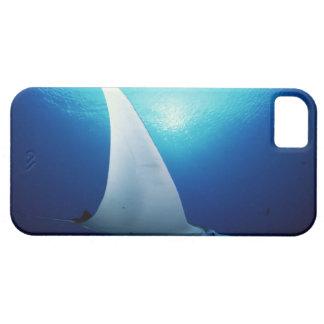 Undersida av en mantastråle iPhone 5 cases