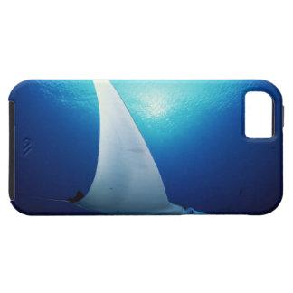 Undersida av en mantastråle iPhone 5 fodraler