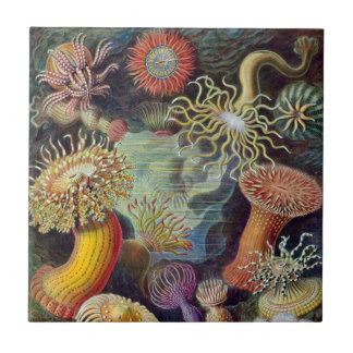 Undervattens- havsanemoner för vintage av Ernst Kakelplatta