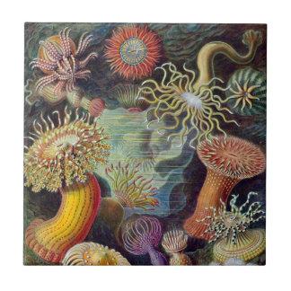 Undervattens- havsanemoner för vintage av Ernst Liten Kakelplatta