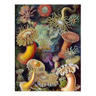 Undervattens- havsanemoner för vintage av Ernst Vykort