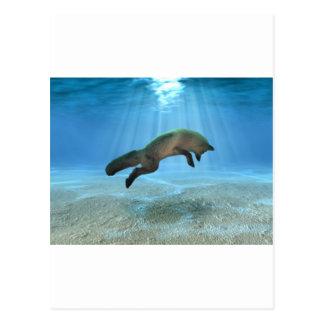 Undervattens- räv vykort