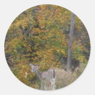 Ung Bambi hjort med nedgångtrees. Runt Klistermärke