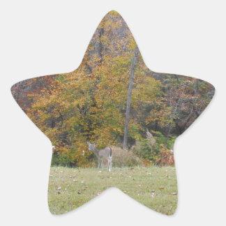 Ung Bambi hjort med nedgångtrees. Stjärnformat Klistermärke