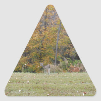 Ung Bambi hjort med nedgångtrees. Triangelformat Klistermärke