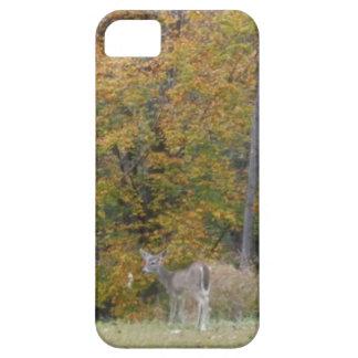 Ung Bambi hjort med nedgångtrees. iPhone 5 Skydd