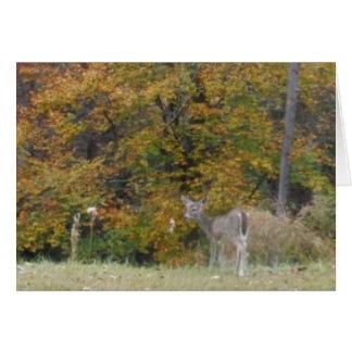 Ung Bambi hjort med nedgångtrees. Hälsningskort