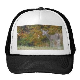 Ung Bambi hjort med nedgångtrees. Keps
