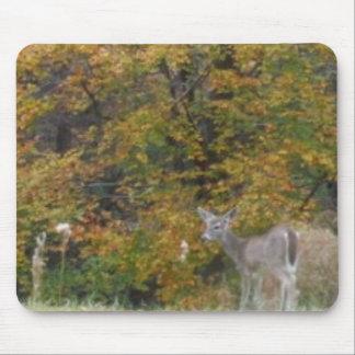 Ung Bambi hjort med nedgångtrees. Mus Matta