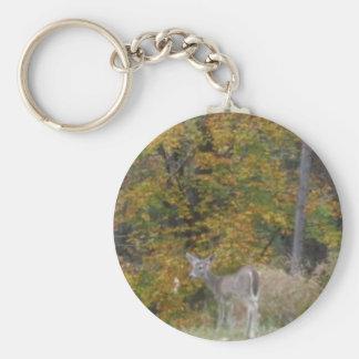 Ung Bambi hjort med nedgångtrees. Nyckelringar