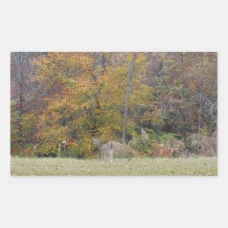 Ung Bambi hjort med nedgångtrees. Rektangulärt Klistermärke