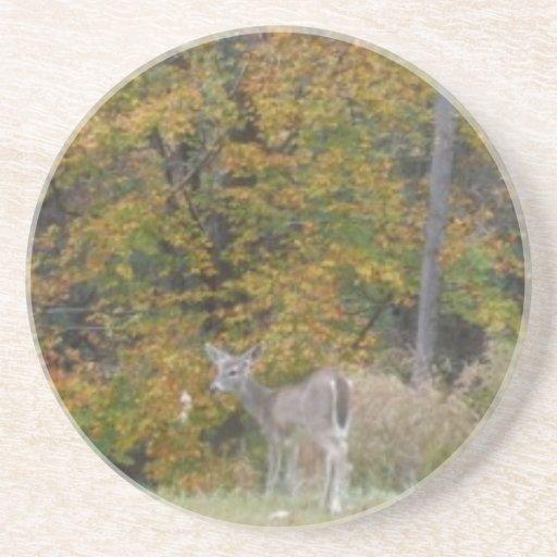 Ung Bambi hjort med nedgångtrees. Glasunderlägg
