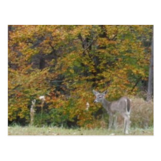 Ung Bambi hjort med nedgångtrees. Vykort