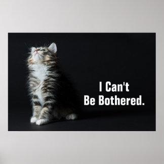 Ung Male tabby katt Poster