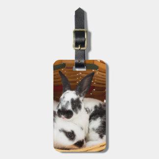 Unga Rex kaniner i påskbasket 2 Bagagebricka