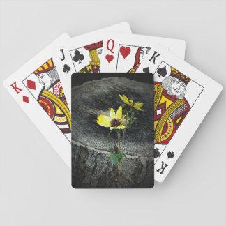 Unga solrosor casinokort