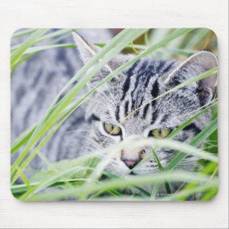 ungt kattporträtt musmatta